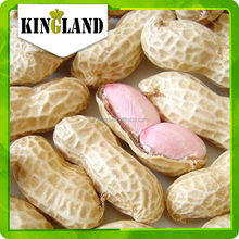 Roasted salted peanuts in shell