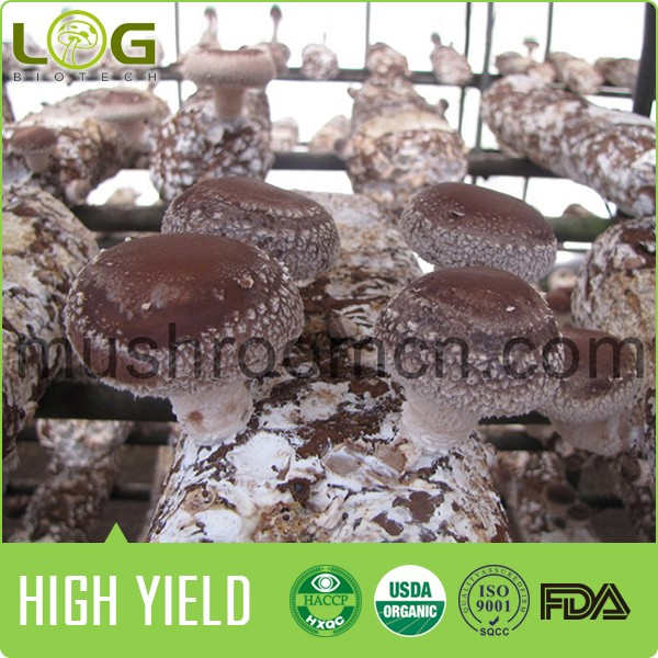 The best price for Best Mushroom Compost Shiitake made in China