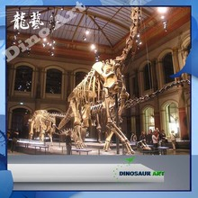 Attractions in china simulation handemade lang neck life size dinosaur skeleton
