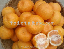 fresh south africa orange/Wholesale Nanfeng Fresh Baby Mandarin Orange