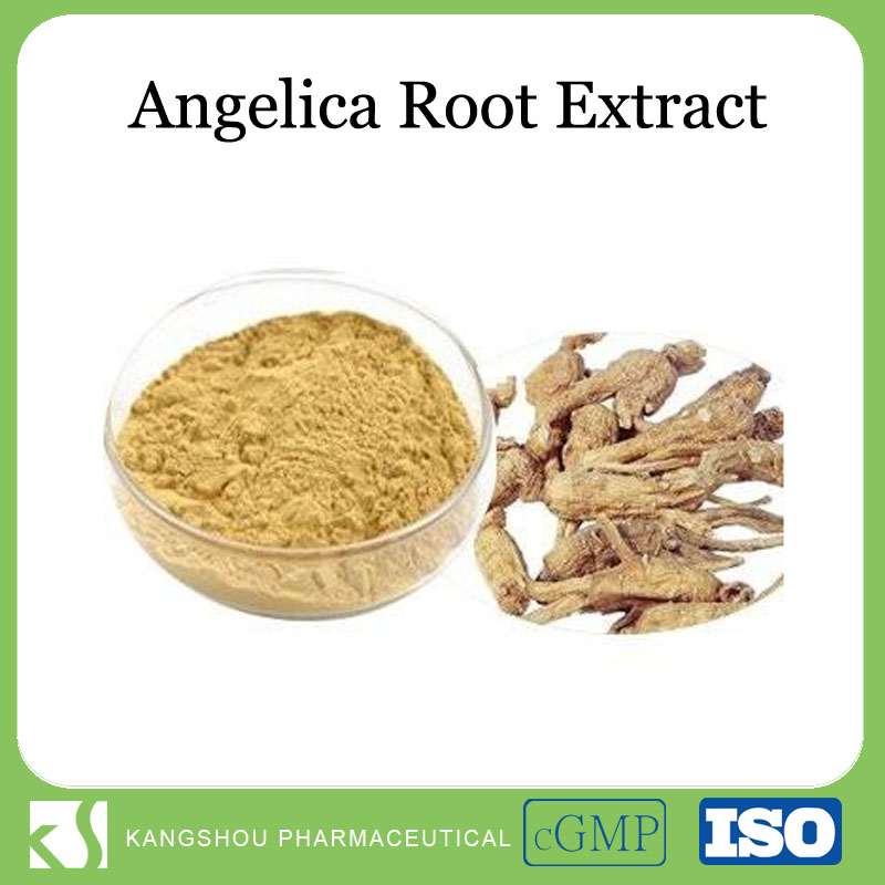 Good for Women's health Natural Angelica root extract powder with 1% Ligustilides