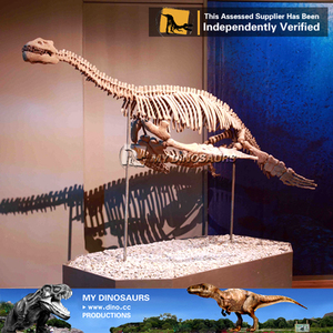 My-Dino life size t-rex dinosaur skeleton models for sale