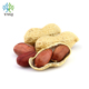 washed Peanuts in shell price in china 7/9, 9/11,11/13