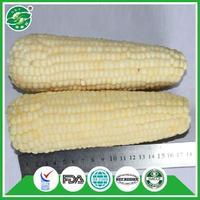 highest quality service pass KOSHER china best cheap price frozen corn brands