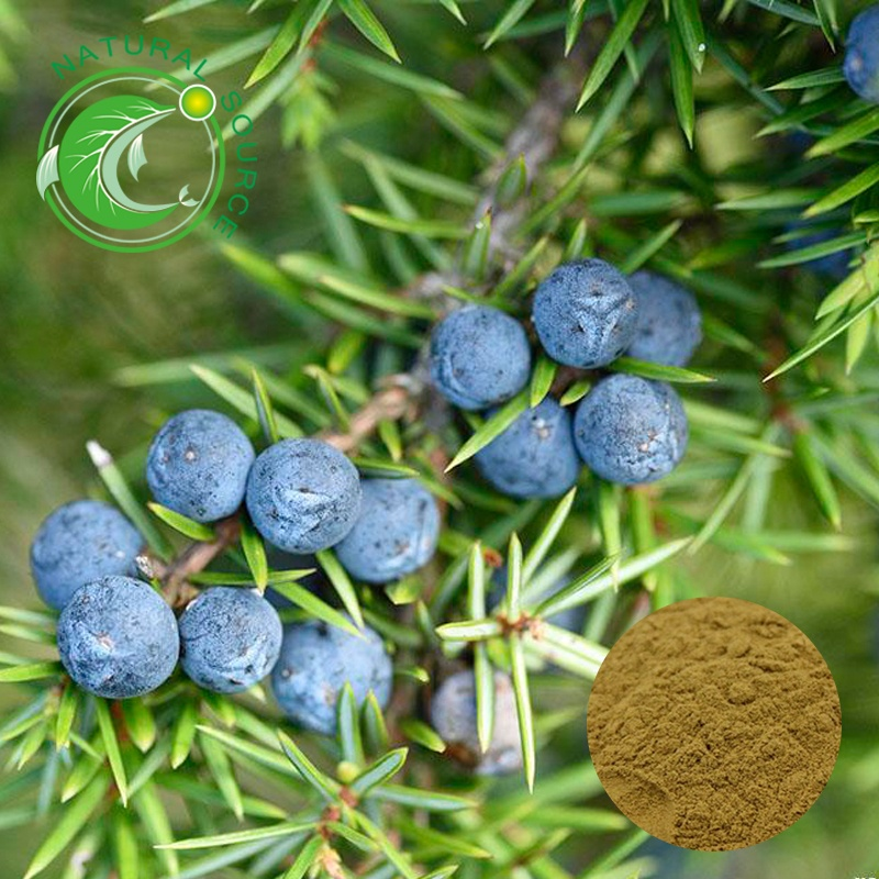 Du Song Health Product Rich Vitamin C Juniperusrigida Juniper Berry Extract 10:<strong>1</strong>