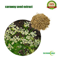 100% Natural Caraway Seed Extract 10:1