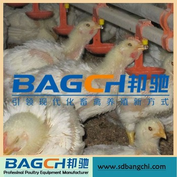 Whole Set Chicken Water System for Poultry House