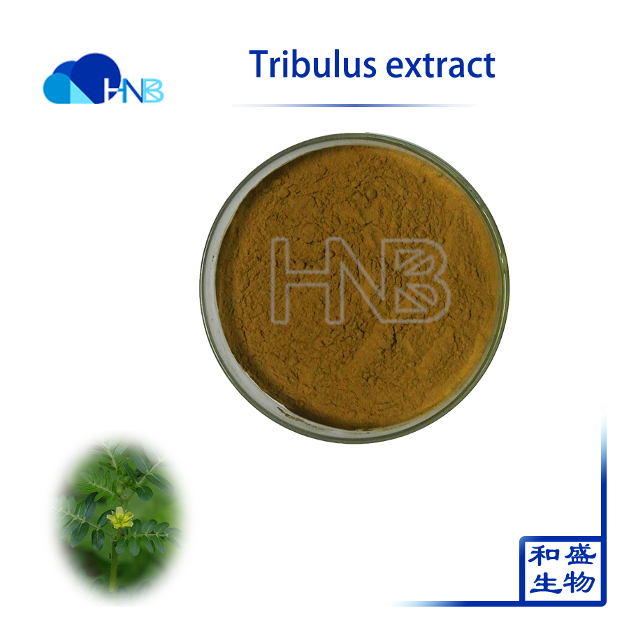 2017 HNB Supply High Quality tribulus terrestris extract / Tribulus Powder