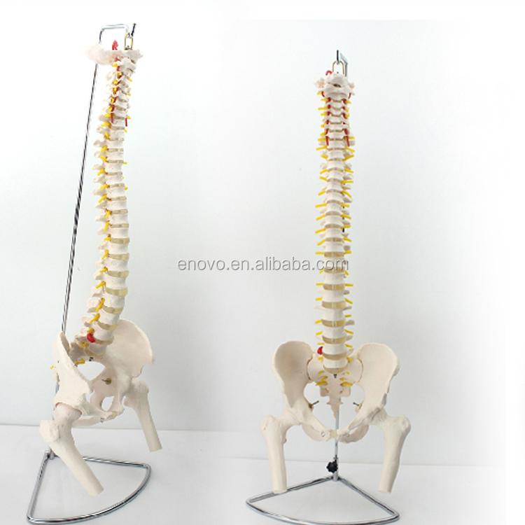 Venta al por mayor ramas de la anatomia-Compre online los mejores ...