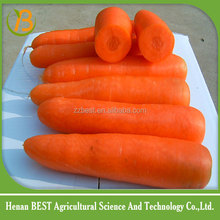 2016 fresh carrots for sale from china