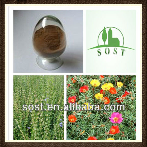 Barbed Skullcap Herb Extract Natural Herbs