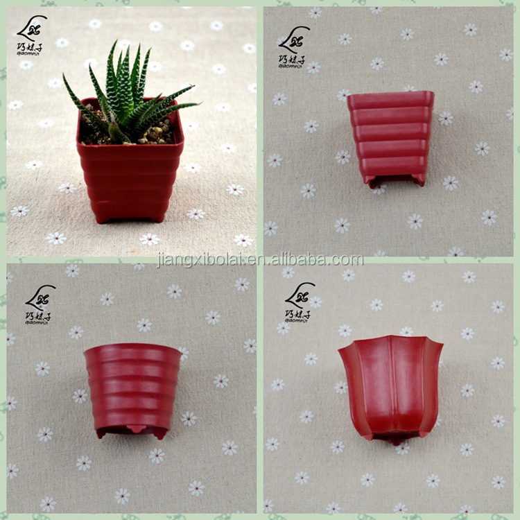 Characteristics of plastic flower POTS of meat plants more small basin to the red circle