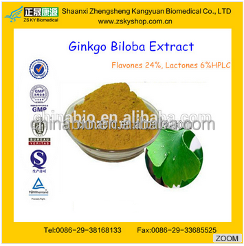 GMP manufacturer supply 100% Pure Ginkgo Biloba Powder Extract