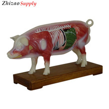 Pig Acupuncture Animal Model