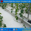 Advanced Hydroponics Agricultural Commercial PCgreenhouse For