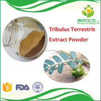 Immune Enhancement Prevailing 100%Green Natual and Pure tribulus terrestris extract powder 60 saponins by ISO certified factory