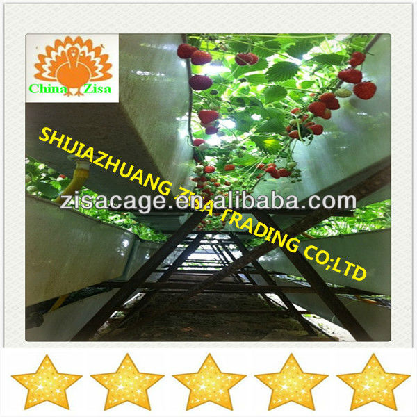 plastic greenhouse strawberry cultivation tray