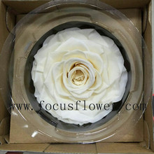 Low Price New Types Preserved Dried Rose From Yunnan