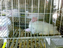 rabbit rearing cage/ battery rabbit coop for poultry rabbit farm
