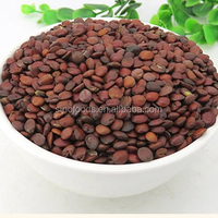 Suan Zao Ren Hot Sale Healthy Jujube Seed Spine Date Seed