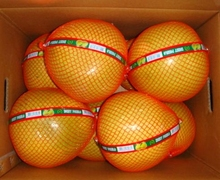 Honey Pomelo 2014 new crop for Europe