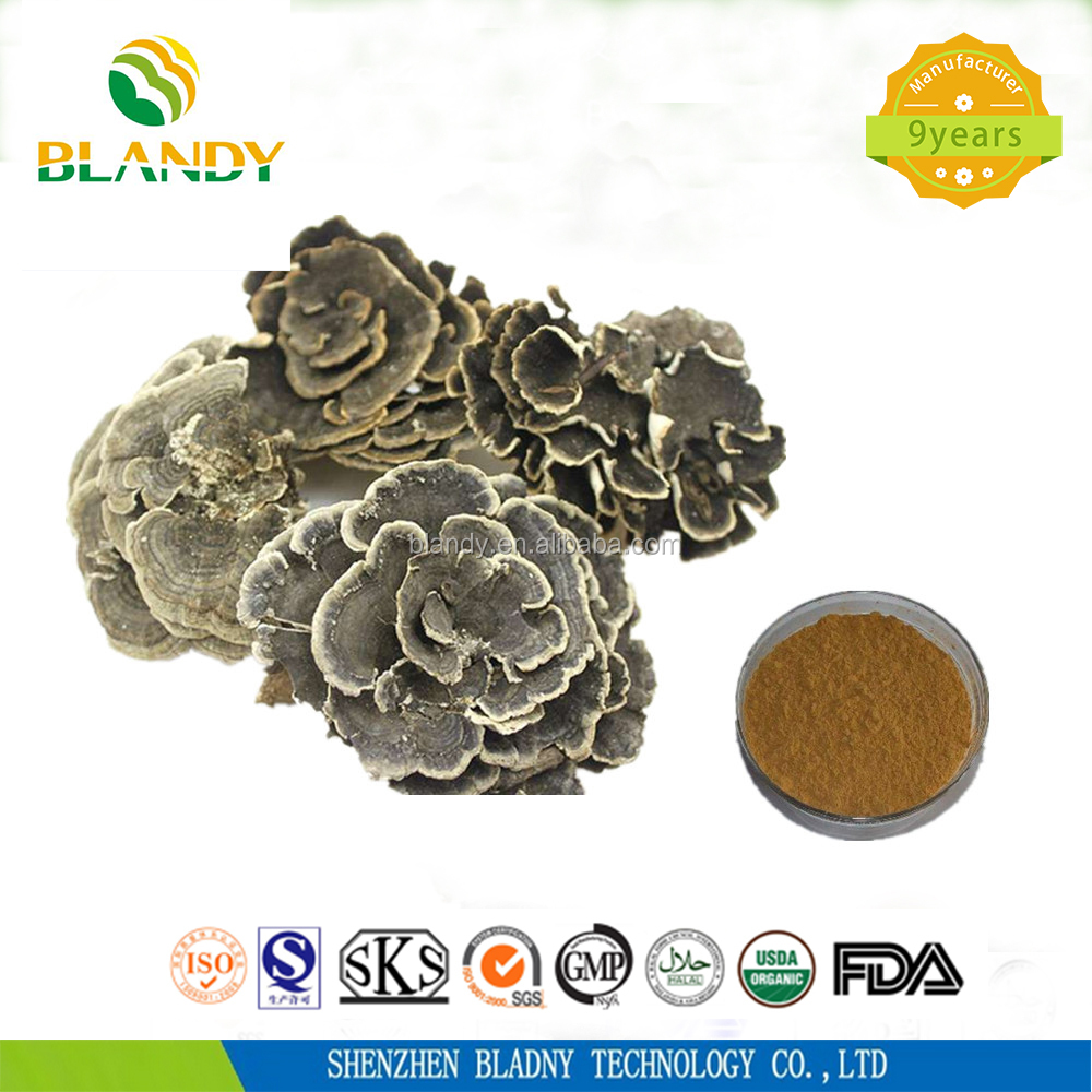 High quality yunzhi mushroom extract Powder
