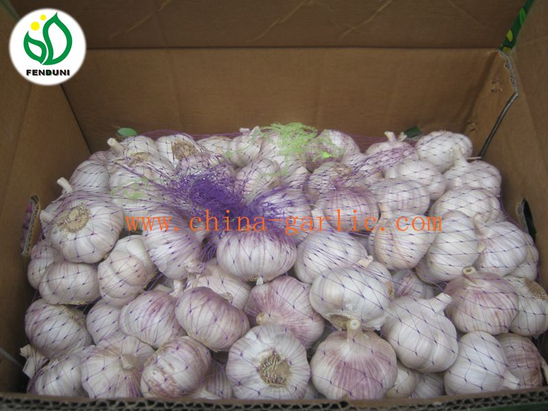 Garlic Supplier from China ( new crop, low price)