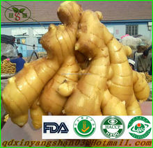 Factory Manufacturer Fresh Ginger 100g up