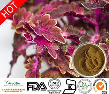 Natural Coleus Forskohlii extract for Weight loss/Coleus forskohlii root extract/20% Forskolin