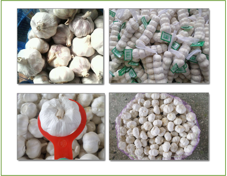 Chinese Jinxiang Garlic For Sale