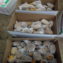 2017 new crop fresh market price potato for sale