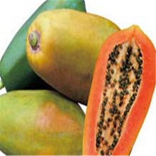 high quality red lady seeds papaya seed for sale pawpaw seeds