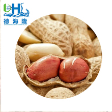 China new products rew type peanut from chinese supplier