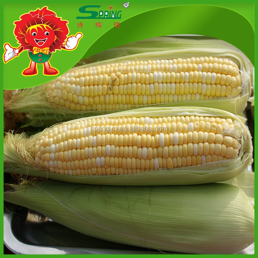 price per ton frozen yellow corn supplier