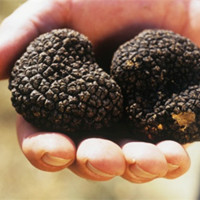 High quality wild black truffle 100% wild truffle for sale