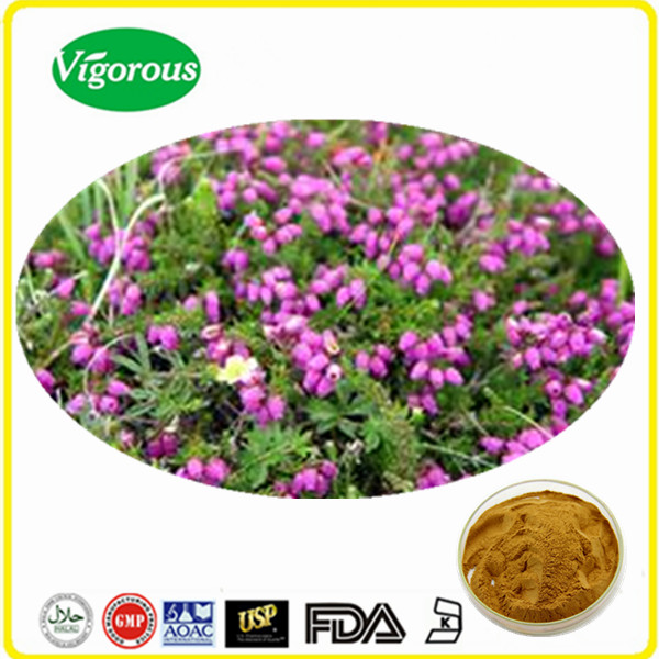 Bell heather extract/Erica cinerea powder/High quality bell heather extract powder 4:1