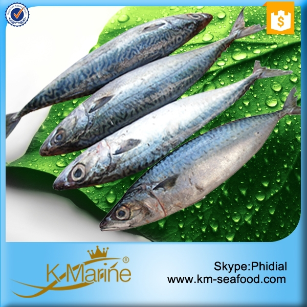 Live seafood mackerel fish