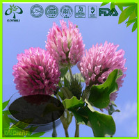 Factory Supply natural Red Clover Flower Extract powder 15% 30% HPLC