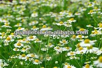 100% Pure and natural Chamomile Extract