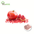 Factory supply organic pomegranate juice powder