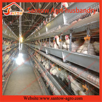 automatic H style breeding cage for chicken design