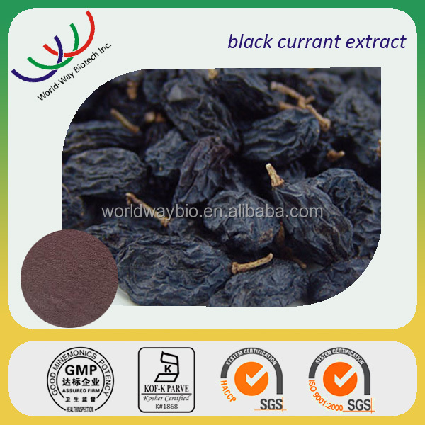 NATURAL anti-oxidant black currant extract 25% anthocyanidins,factory supply made in China black currant pe