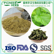 great slimming tea material Instant mulberry leaf extract powder for losing weight