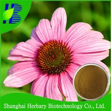 Competitive price Echinacea Extract 4% Polyphenols/ echinacea extract in stock