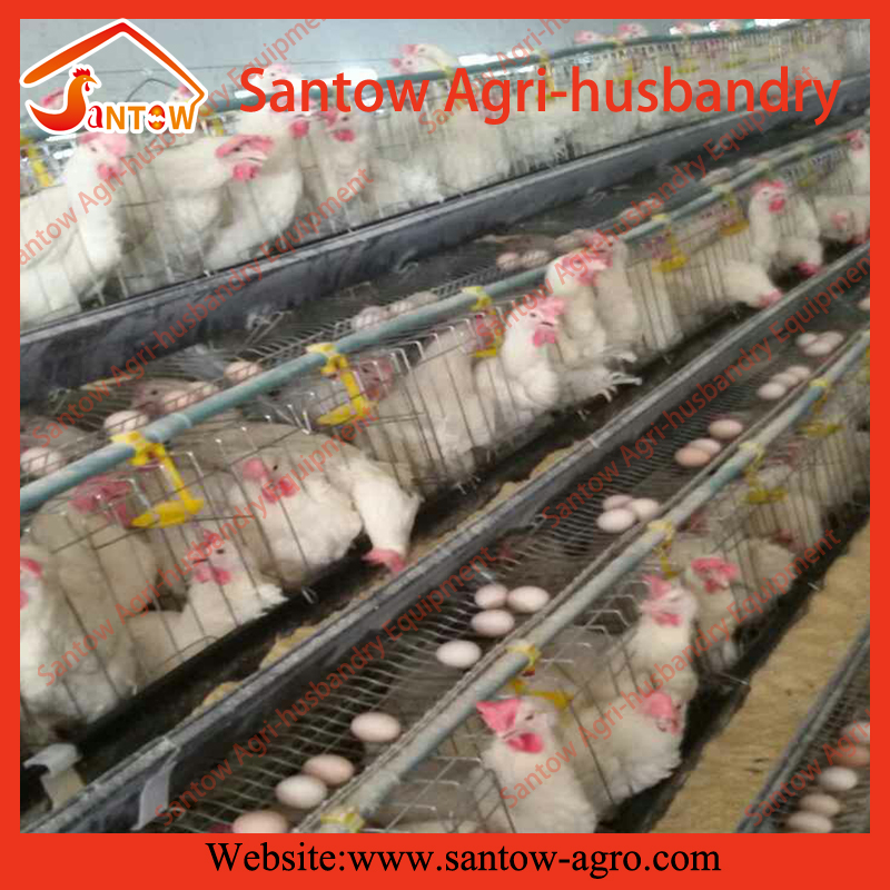 Pakistan Libya Turkey poultry farm layer cage chicken layer poultry designs
