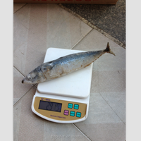 land frozen frozen mackerel prices is competitive