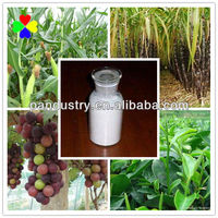 CAS NO.1912-24-9 Weedkiller China Supplier Atrazine 80% WP
