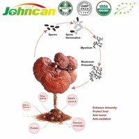 Organic Reishi Mushroom Extract Powder/Bulk Organic Reishi Powder