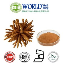 Natural Summer Grass Winter Worm Extract/Wholesale Cordyceps Sinensis Extract/Chinese caterpillar fungus
