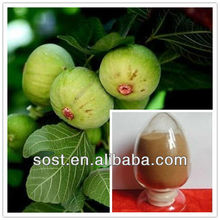 ficus carica fruit extract/Fig Extract for reducing blood fat